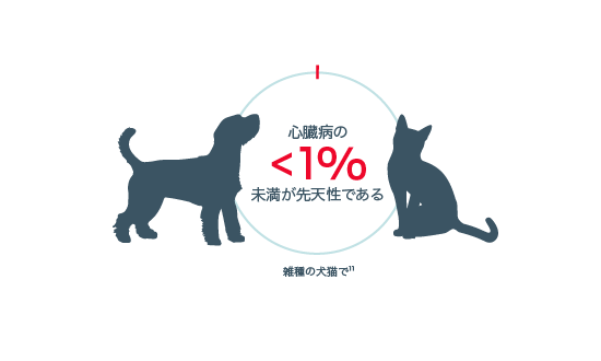 < 1% of heart disease is congenital in mixed breed dogs and cats