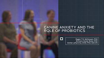 gut-brain-axis-canine-anxiety-video