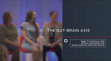 gut-brain-axis-video