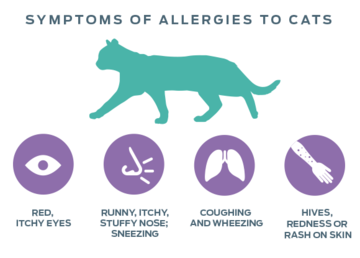 neutralizing-allergens-symptoms-of-allergies-to-cats