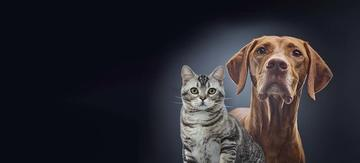 dog and cat looking at the camera