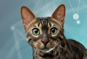 purina-institute-science-of-cats
