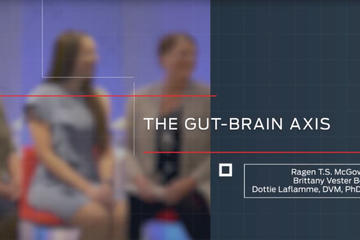 gut-brain axis video