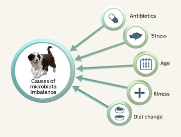 microbiome-and-health