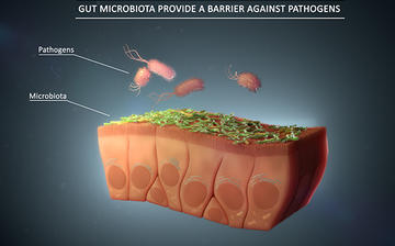 gut-microbiota-provide-a-barrier-against-pathogens