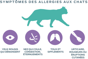 the allergic burden allergies to cats