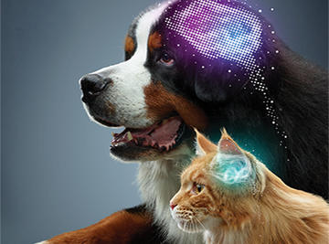 canine-and-feline-brain-health